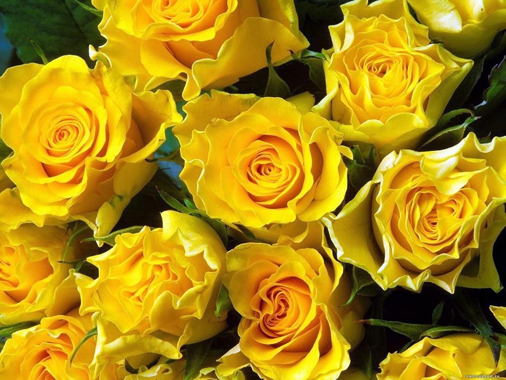 Картинки желтая роза, спасибо сестре как