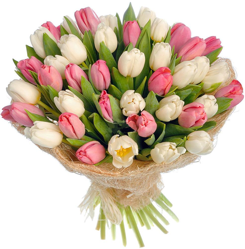 Поздравления тюльпаны фото